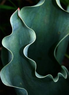 dark deep green color / botanical aesthetic / abstract plant photography / nature art / succulent macro / leaf close up / garden mood Patterns In Nature, Textures Patterns, Nature Pattern, Fotografia Macro, Natural Forms, Natural Curves, Organic Shapes, Organic Form, Still Life