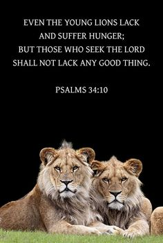 Bible Quotes, Bible Verses, Prayer For My Son, Seek The Lord, Faith In Love, Old Testament, Lions, Psalms, Prayers