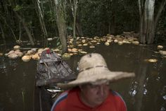Brazilian farmer Jander Santos de Souza paddles his canoe amid pumpkins in his plantation which is inundated with floodwaters from the Solimoes River, in the rural municipality of Manacapuru, Amazonas state May 5, 2015. (Photo by Bruno Kelly/Reuters)