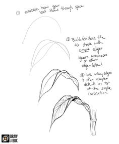 sketches of people Leaf Drawing, Plant Drawing, Painting & Drawing, Flower Drawing Tutorials, Art Tutorials, Botanical Drawings, Botanical Art, Drawing Lessons, Drawing Techniques