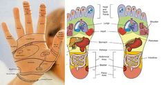 Viral Alternative News: 6 Easy-to-Find Reflexology Points To Relieve Everything From Digestion to Sleep Disorders