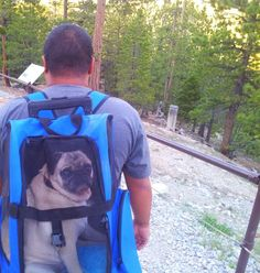 Except I envision it as a back pack to take my cat on adventures