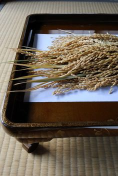 Japanese rice ears...brought back rice just like this from grandfathers farm in 1984