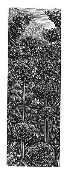'Aliums of Giverny', woodblock print by Andy English. Black and white #floral #botanical #art