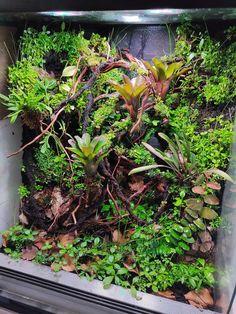 Paludarium, Vivarium, Fish Tank Garden, Cool Fish Tanks, Geckos, Aquascaping, Terrarium, Yard, Flowers