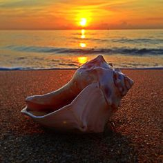 Conch Castaway, Courtesy of Fort Lauderdale Seaside Photography