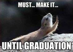 Image result for grad school humor