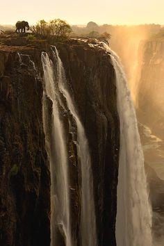 Water for Elephants   Italian-Luxury   Instagram