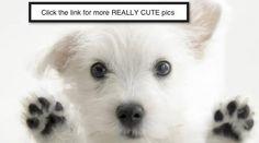 Really Cute Animals