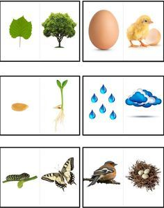 Parejas lógicas de la naturaleza