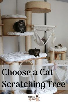 Choosing the right cat scratching tree for your cat can be difficult and overwhelming. But luckily the many different kinds of scratching trees available make it easy to accommodate your cat's individual needs.  #siamesecattree #cattree #bestcattree #scratchingcattree Cool Cat Trees, Diy Cat Tree, Furniture Scratches, Cat Furniture, Furniture Ideas, Old Cats, Cats And Kittens, Cat Tree Designs, Cat Apartment