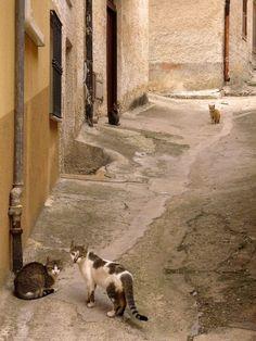 Cats Crew, Aragona, Sicily. Animals Of The World, Cats, Travel, Italy, Sicily, Gatos, Viajes, Destinations, Traveling