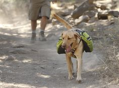 Approach Pack™ Dog Pack – Backpacking Adventure Pack for Canine Hikes - from Ruff Wear