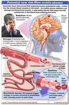 Blood/Brain Barrier is compromised.  It is your best line of Defense.  http://www.endemf.com