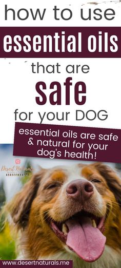 Essential Oils are a safe natural option for your dog's health. Learn which essential oils you can use and which not to use, how oils can benefit your dog, and how to dilute and use the oil safely on your dog when you apply it, how to diffuse essential oils for your dog and let them smell it. Help your dog with motion sickness, anxiety, allergies, fleas and tics, joint pain, and more. Lavender, Frankincense, DigestZen, OnGuard, Aromatouch are some good choices for your canine.