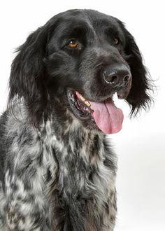 rare dog names - 714×1000