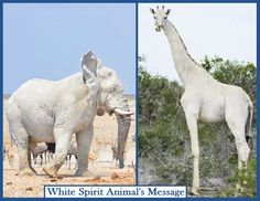 Inspires Vibrational Energy Self-Healing Practices Animal Spirit Guides, Spirit Animal, White Spirit, Power Animal, Self Healing, Albino, Lion Sculpture, Horses, Statue