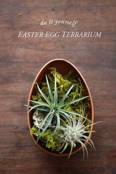 Easter egg terrarium