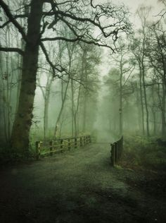 bonitavista:  Balloch, Scotland photo via sheryl