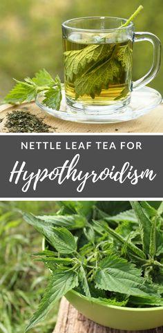 Nettle Leaf tea for #Hypothyroidism