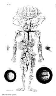 Virgos ruling body part is the nervous system which makes sense cowper william the anatomy of humane bodies appendix table 3 cowpers new english text with 105 plates by grard de lairesse and abraham blooteling ccuart Images