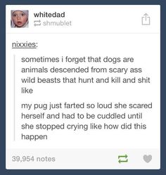 That's the most puggy thing to happen in the history of pugs…