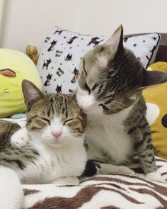 """A little tabby kitten was saved from death row in the nick of time and given a new feline brother who looks just like him. Meet Unagi!  @suzume0513 In June, Unagi the kitten ended up at an animal control center in Yamaguchi Prefecture, Japan in need of rescue. """"I saw from a website by cha..."""