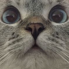 """""""UGH, the front-facing camera is on again."""""""