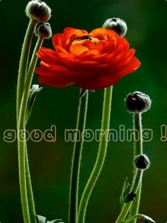 Good Morning......Have a great day!