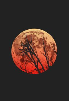 Blood Moon. Saw this when it was coming up over the horizon. Amazing color.
