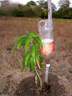 agriculture – Page 2 – Sustainable Farming in Nicaragua Micro Garden, Veg Garden, Vegetable Garden Design, Edible Garden, Farm Gardens, Small Gardens, Hydroponic Gardening, Hydroponics, Irrigation