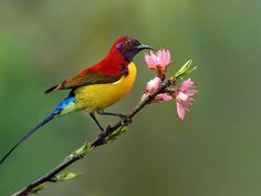 Bird Sanctuaries in Sikkim, India @ Sanctuariesindia.com
