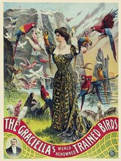 The Graciella's World Renowned Trained Birds'. Early 1900's vintage circus poster.