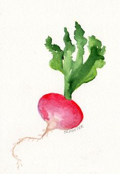 for kitchen--Original Red Radish Painting watercolor, Vegetable Series - Fresh from the farm, 5 x 7 Watercolor Fruit, Easy Watercolor, Watercolor Pencils, Watercolor Cards, Watercolor Illustration, Watercolour Painting, Watercolor Flowers, Painting & Drawing, Watercolors