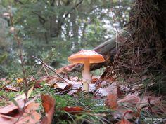 Wandelen in de Kaapse bossen ... http://godisindestilte.blogspot.com/2015/10/wandelen-in-de-kaapse-bossen.html