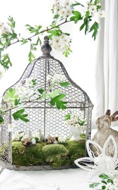 Birdcage turns into rabbit cage...