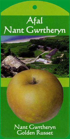 Nant Gwrtheryn Apple Fruit Tree Tag
