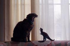 Cat vs. Dinosaur. RAWR