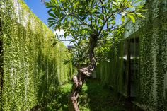 MIA Design Studio envelopes Vietnam house in plant-covered walls