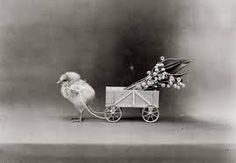 chicken cart - Google Search