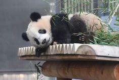 今日のパンダ(2107日目) | 毎日パンダ