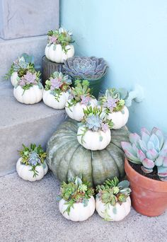 Hello friend, happy Fall lo pop out OP Thanksgiving Decorations, Halloween Decorations, Fall Friends, Succulents Garden, Purple Succulents, Succulent Planters, Fall Home Decor, Modern Fall Decor, Fall Pumpkins