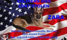 UPDATE about Zara: Army National Guard's missing dog suspected to be in South Carolina PLEASE SHARE -Possible locations #Charleston, #Greenville or #Spartansburg. http://www.pawsforreaction.com/missing-army-dog-update.html
