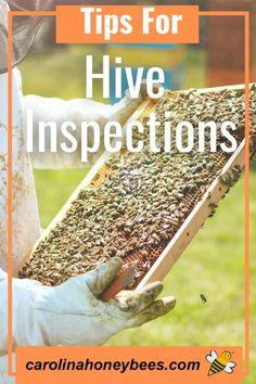 How To Start Beekeeping, Beekeeping For Beginners, Bee Safe, Worker Bee, Raising Bees, Honey Benefits, Bee Boxes, The Learning Experience, Backyard Beekeeping