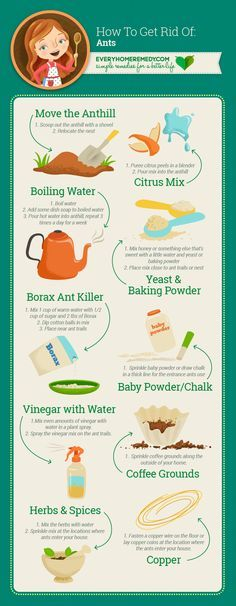 How to Get Rid of Ants in the House - Naturally and Easy