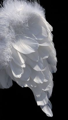 Hand Made White Marabou Trimmed Wings