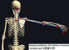 アナトミートレインの筋・筋膜リリースの経路まとめ!