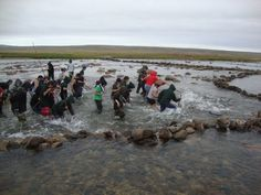 Fishing with kakivaks, photo by David Illuitok