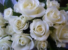 'Eskimo' roses! Roberts Flowers of Hanover, Hanover, NH