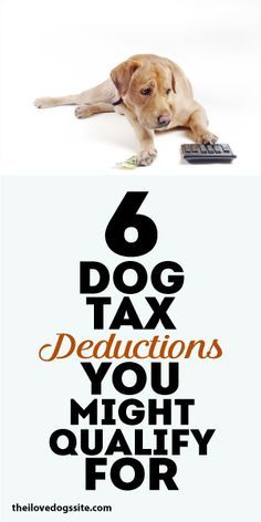 6 DOG TAX DEDUCTIONS You Might QUALIFY FOR: 1) Moving 2) Working Dogs 3) Therapy Dogs 4) Performance Dogs 5) Breeding + Showing Business 6) Fostering or Adoption